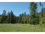 Photo 91 Acres off FS 2745